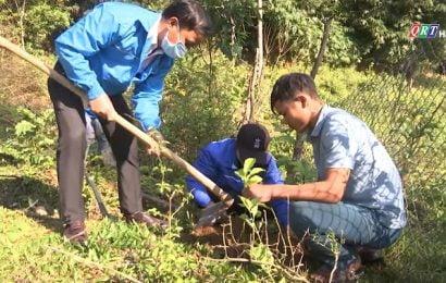 Thanh niên trồng 2.000 cây giỗi xanh dịp Tết trồng cây