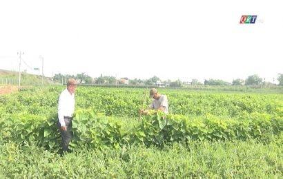 Điện Quang- Phát triển nghề trồng dâu nuôi tằm