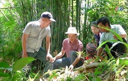 Quảng Nam tập trung chuyển dịch kinh tế vùng trung du, miền núi